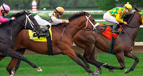 horseracing_bookmakers